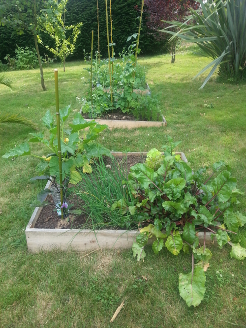 potager-carre-1